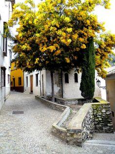 Yellow Tree in Granada by Ruben Serra, via 500px