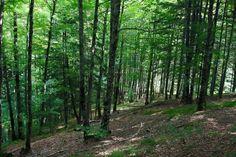 La Selva de Irati se encuentra en su mayor parte en la zona norte de Navarra, en una cuenca rodeada por montañas, ubicada en gran parte en los valles pirenaicos de Aezkoa y Salazar. 17.195 Hectáreas de preciosa naturaleza que desde la antigüedad ha tenido un aprovechamiento ganadero, forestal y cinegético. - http://www.floresyplantas.net/selva-de-irati/