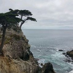The Lone Cypress on a Sunny Sunday #live #livinglife #lovinglife #goodstuff #goodtimes #goodvibes #getout #explore #travel #travelcalifornia #seetheworld #pebblebeach #montereylocals #pebblebeachlocals - posted by Carolina https://www.instagram.com/coffeebean44 - See more of Pebble Beach at http://pebblebeachlocals.com/
