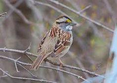 birds new england - Google Search