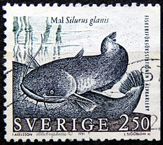 Sweden.  FISHES. SILURUS GLANIS.  Scott 1868 A563, Issued 1991 June 30, Perf. 13 on 3 Sides, 2.50. /ldb.