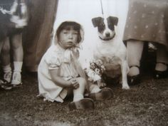 Vintage Photo JACK RUSSELL/SMOOTH FOX TERRIER Dog Steals Scene at 1930s Wedding