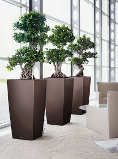 Lechuza Cubico Planters | Klaric Home & Garden Accessories Shop Philippines