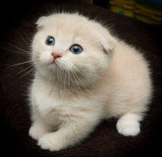 The very definition of cute….