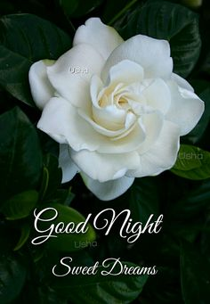 Good Night Cards, Good Night Greetings, Good Night Wishes, Good Night Sweet Dreams, Good Night Quotes, Good Night Image, Good Morning Good Night, Morning Msg, Happy Name Day