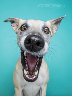 "Hildesheim, Germany-based photographer Elke Vogelsang (a.k.a. ""Wieselblitz"") turns her lens toward her three dogs to capture the essence of their vibrant p"