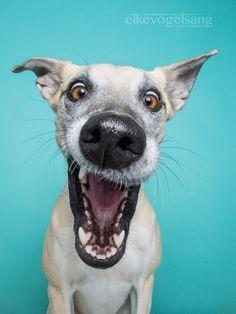 Mi Metrópolis Moderna • Nueva increíblemente expresivos retratos del perro Elke ...