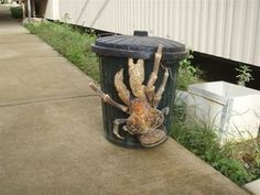 That's a real friggin' crab called a Coconut Crab. Commence nightmares.