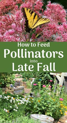 Feed Pollinators into Late Fall Feed pollinators into late fall. 22 plants that attract butterflies and bees that bloom late in the season.Feed pollinators into late fall. 22 plants that attract butterflies and bees that bloom late in the season. Plants That Attract Butterflies, Butterfly Garden Plants, Butterfly House, Monarch Butterfly, Wizard101, Organic Horticulture, Organic Gardening Tips, Vegetable Gardening, Container Gardening