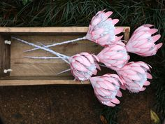 Pink Paper Proteas with Brush-stroked White Highlights