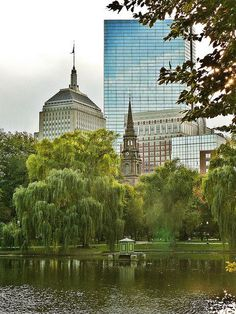 Looking southwest from the tree-draped pond at Boston Public Garden with the old and new John Hancock Towers and the spire of the Arlington Street Church in the background.