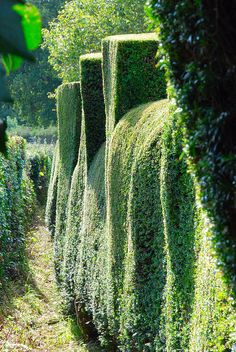 Hedging Your Way Down to Great Dixter! | Flickr - Photo Sharing!