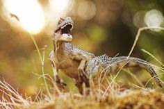 TIPS & TRICKS: Getting Prehistoric with the Edge 80 Optic   Lensbaby Blog.  Photo by Keri Friedman