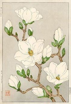 torii gallery: Magnolia by Kawarazaki Shodo: - Beste Art Pins Botanical Drawings, Botanical Prints, Art Chinois, Illustration Botanique, Art Japonais, Japanese Flowers, Asian Flowers, Japanese Painting, Japanese Artwork