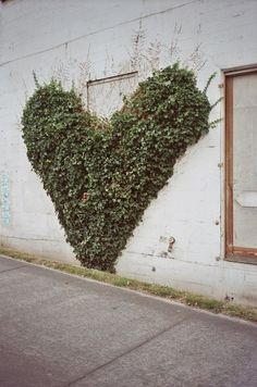 Heart-shaped vine. Photography by Tom Humphrey via flickr.