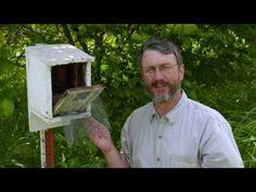 Homes for Nesting Bluebirds - YouTube Bluebird House, Two Birds, Bluebirds, Recycled Wood, Garden Inspiration, Bird Houses, Bird Feeders, Nest, Homes