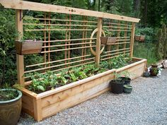 "Container Vegetable Garden: ""Four varieties of tomatoes, spinach, leaf lettuce & romaine, shelling peas & snow peas, bok choy, rainbow chard, strawberries in the baskets & tons of herbs."" 