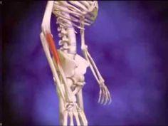 Epicondilite Lateral - Compacto de Vídeos.   Para quem tem aquelas dores de cotovelo, na acepção da palavra, aqui estão alguns exercícios fáceis de fisioterapia para fazer em casa.