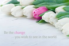 Inspirational Thought – Be The Change You Wish to See in The World — Mind Fuel Daily