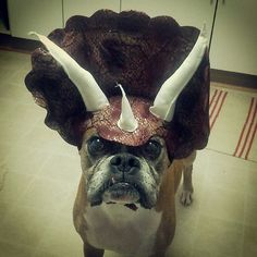 Triceratops Dog Costume – $12