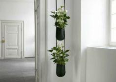 piante in angolo