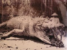 This crocodile was shot and killed in Queensland in 1957 by a female croc hunter! Krystina Pawlowski was a Polish immigrant who moved to Australia and earned a reputation as an accomplished crocodile hunter. Animals And Pets, Cute Animals, Crocodile Hunter, Extinct Animals, Bizarre, Alligators, Wtf Fun Facts, All Nature, Weird Creatures
