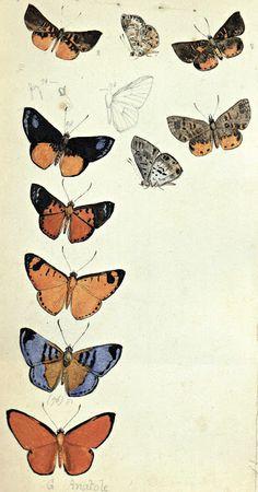 """Olímpia Reis Resque: Borboletas amazônicas """" Esse turbilhão de asas palpitantes, numa louca inquietação febril, entre continuados banquetes de mel e perfume, celebra, anualmente, no seio das matas amazônicas, a festa perene do amor e da alegria. Texto em Eidorfe Moreira (1912-1989). Obras reunidas de Eidorfe Moreira. 1989, v. 1. Ilustração: Aquarela e grafite sobre papel de Henry Walter Bates (1825-1892)  - 1851-1859.   Original da viagem à Amazônia com Alfred Russel Wallace. No Blog…"""