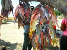 FIsh - steamed, fried, escoveitched, you name it Jamaica Country, Narrative Photography, Different Fish, Caribbean Recipes, Caribbean Food, Sea Fish, Fish Fish, Island Food, Jamaican Recipes
