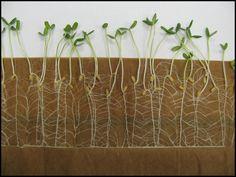 40 Reasons to start saving seeds from  your garden today!  #garden #gardening