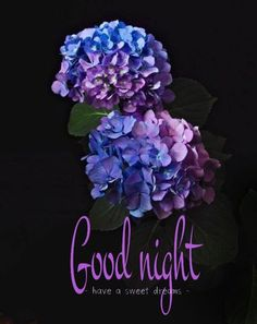 good night everyone friends sweet dreams Good Night World, Good Night All, Good Night Everyone, Good Night Friends, Good Night Wishes, Good Night Moon, Good Night Quotes, Night Gif, Beautiful Good Night Messages