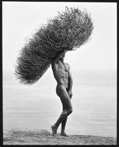 Male Nude with Tumbleweed, Paradise Cove  1986  Artist Herb Ritts, American, 1952–2002  PLACE DEPICTED  Paradise Cove, United States