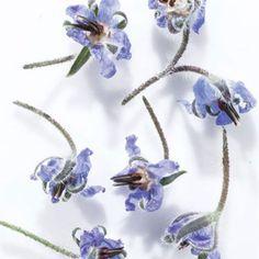 Spring Flowers | SAVEUR