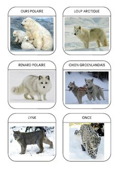 Imagier des animaux polaires Fun Facts About Animals, Animal Facts, Artic Animals, Animals For Kids, Teaching Kids, Kids Learning, African Grey Parrot, Montessori Materials, Rare Albino Animals