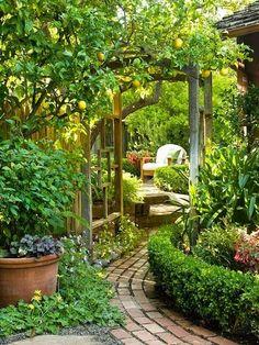 moois en liefs/ I would LOVE to have a lemon tree. This is awesome! garden path, unique garden gate, potted plants, patio