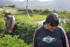 Productora y Productor de papas negras, Mucuchies, Merida, Venezuela.