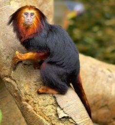 beautiful animal photos - Google Search