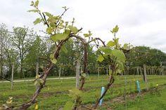 Nearwood Winery and Vineyards Harvest Hosts #ad #NearwoodWinery