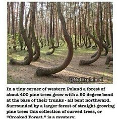 Pin By Shawni B On Stories From A Frame Captured And Unseen - To this day the mystery of polands crooked forest remains unexplained