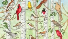 This interactive poster allows a user to hear the bird songs of various birds of Minnesota. Used with permission from the Minnesota Conservation Volunteer Magazine, Copyright All rights reserved. Interactive Poster, Bird Calls, Bird Poster, Migratory Birds, Science Activities For Kids, Science Games, All Birds, All Gods Creatures, Science And Nature