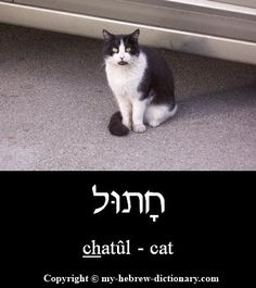 """How to say """"Cat"""" in Hebrew. Click here to hear it pronounced by an Israeli: http://www.my-hebrew-dictionary.com/cat.php"""