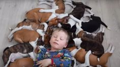 Some homes have 1 or 2, but VERY few homes have 16 puppies running around at one time, like this household...