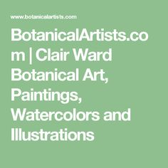 BotanicalArtists.com | Clair Ward Botanical Art, Paintings, Watercolors and Illustrations