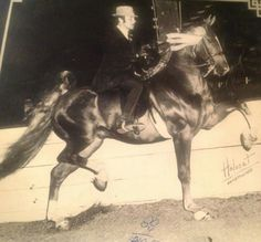 World Champion CH Bandstand and Paul Priebe