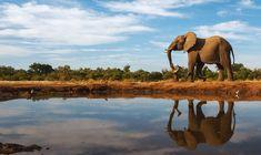 Elephat at wateer hole -- SaveAnimalsFacing Extinction -- 8-6-16