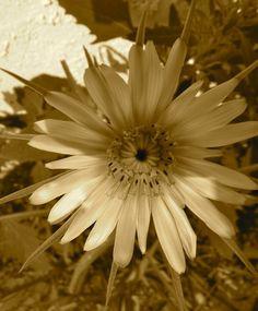 Weed or Flower 2