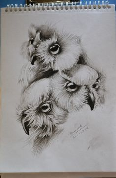 """Owl Sketch"" First Attempt on Charcoal Pencil Sketch... Done By Me Reference: Google Image #owlsketch #charcoalsketch #3owlfaces"