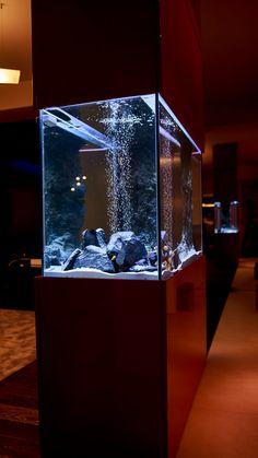 Aquarium Craft, Wall Aquarium, Aquarium Design, Aquarium Fish Tank, Hall Interior Design, Home Stairs Design, Home Design Decor, House Design, Small Fish Tanks
