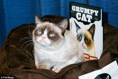Tardar Sauce aka. Grumpy Cat makes appearance at Kitson Santa Monica for her book launch