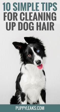 My Favorite Tips & Hacks for Cleaning Up Pet Hair.