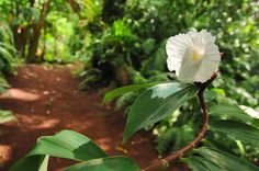 SAINT PHILIPPE // Le Jardin des Parfums et des Epices : Parc - jardin - Ile de La Réunion Tourisme